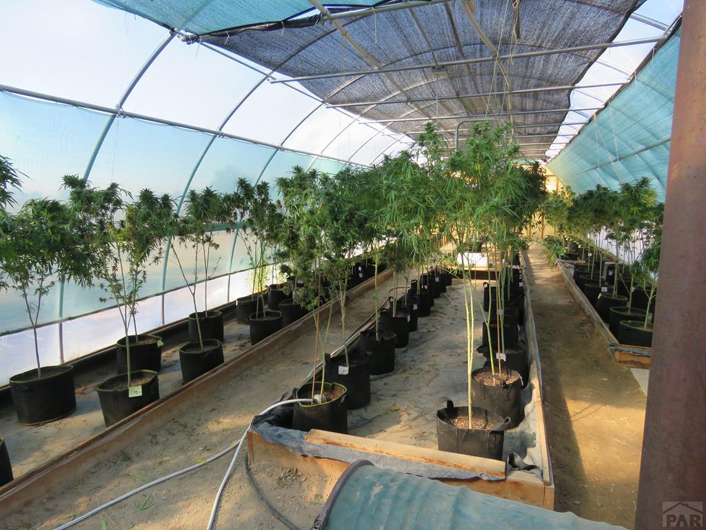 Greenhouse Organic Hemp for additional photo 36
