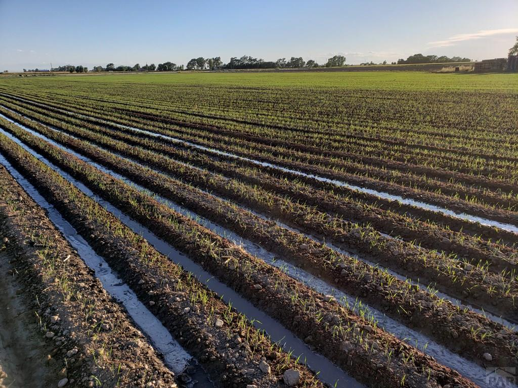 Irrigated Oats for additional photo 2